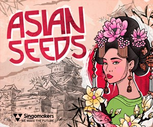 Loopmasters singomakers asian seeds 300 250