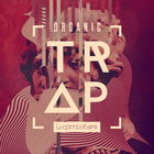 Royalty free trap samples  trap beats  synth chord and trap vocal loops  sub bass and fx sounds  authentic music