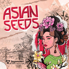 Singomakers asian seeds loops samples asia inspired sounds 1000 web
